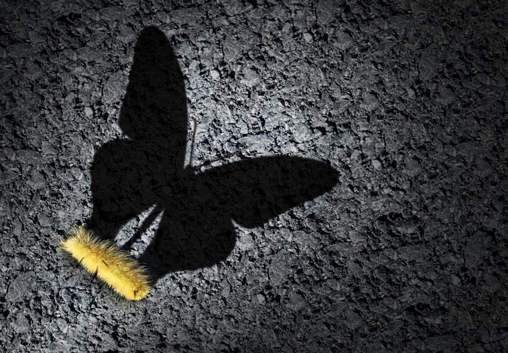 A caterpillar casting a shadow of a butterfly.