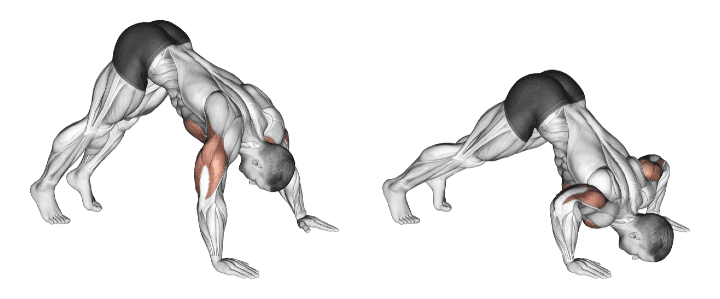 An illustration showing how to do a pike push-up and the muscles worked.